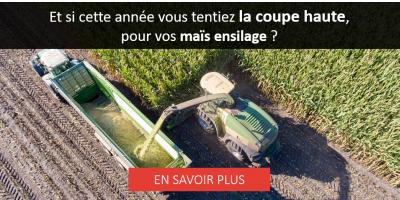 Maïs ensilage : hauteur de coupe et qualité du fourrage 🌽